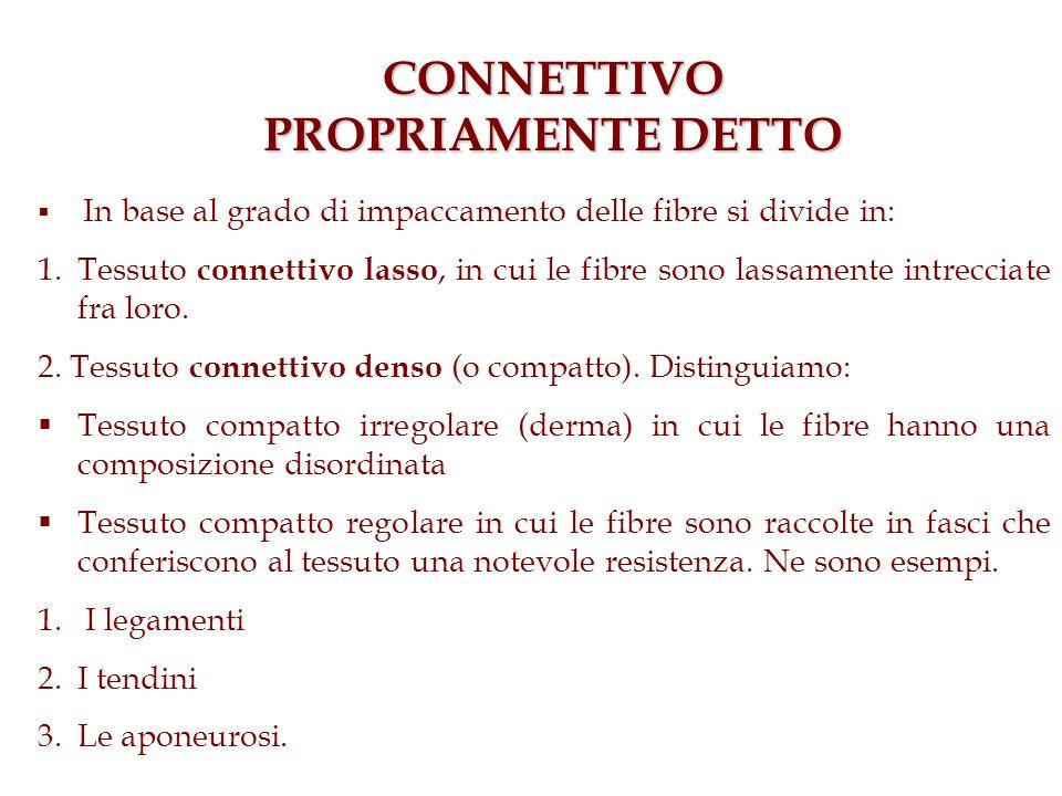 CONNETTIVO PROPRIAMENTE DETTO