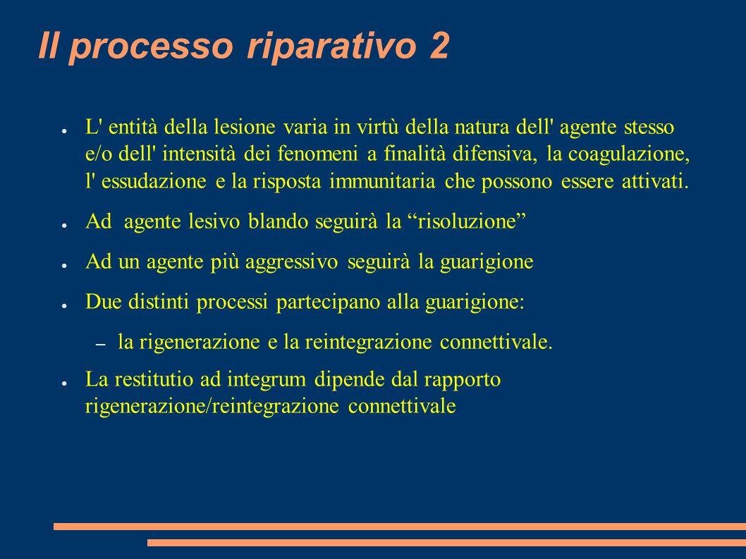Il processo riparativo 2