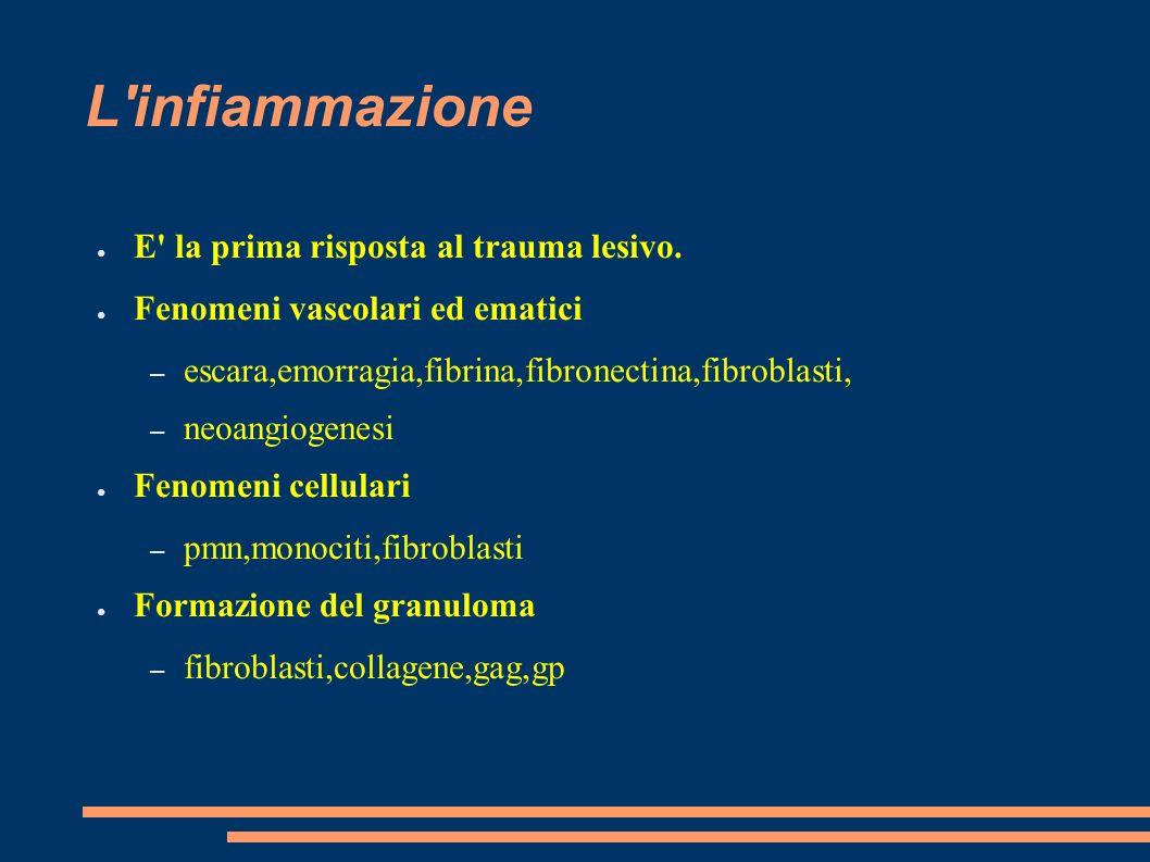 L infiammazione E la prima risposta al trauma lesivo.