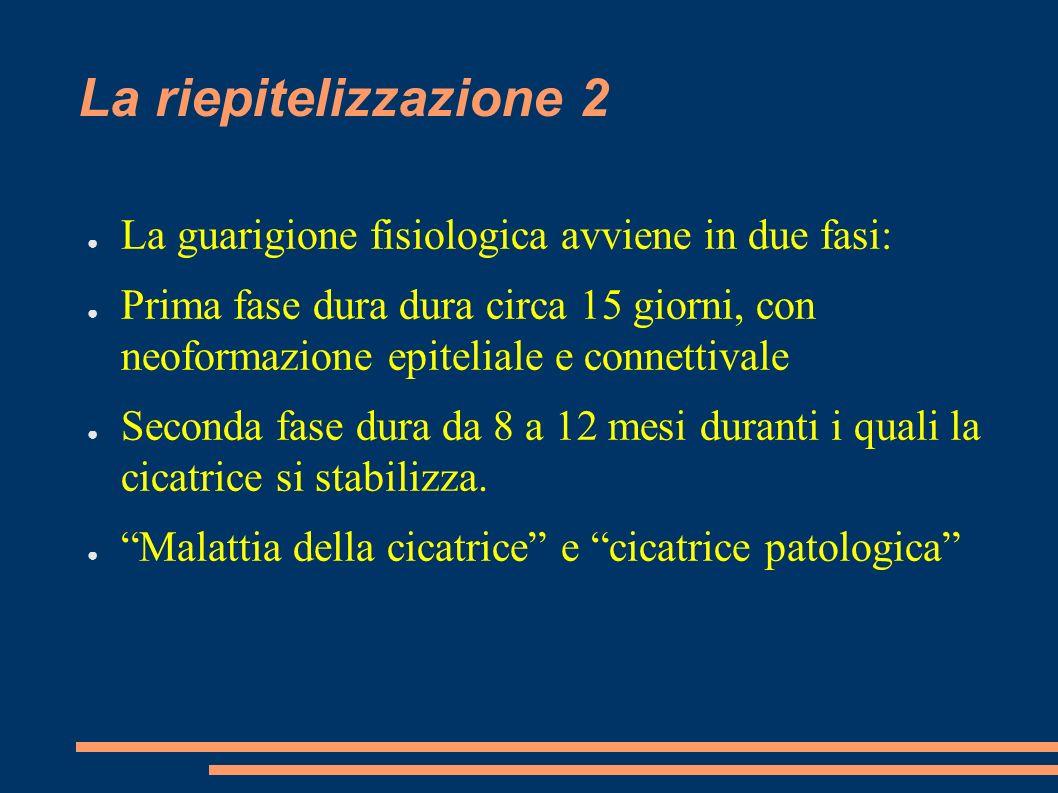La riepitelizzazione 2 La guarigione fisiologica avviene in due fasi: