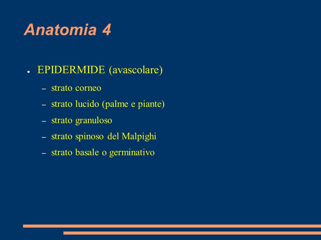 Anatomia 4 EPIDERMIDE (avascolare) strato corneo