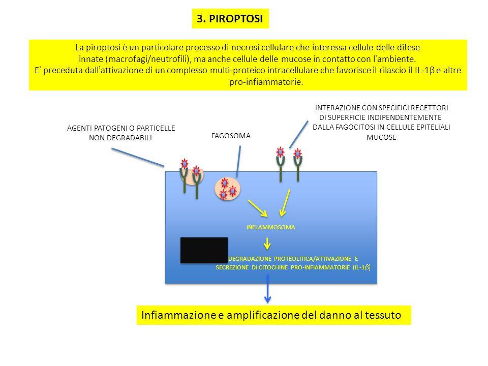 Infiammazione e amplificazione del danno al tessuto