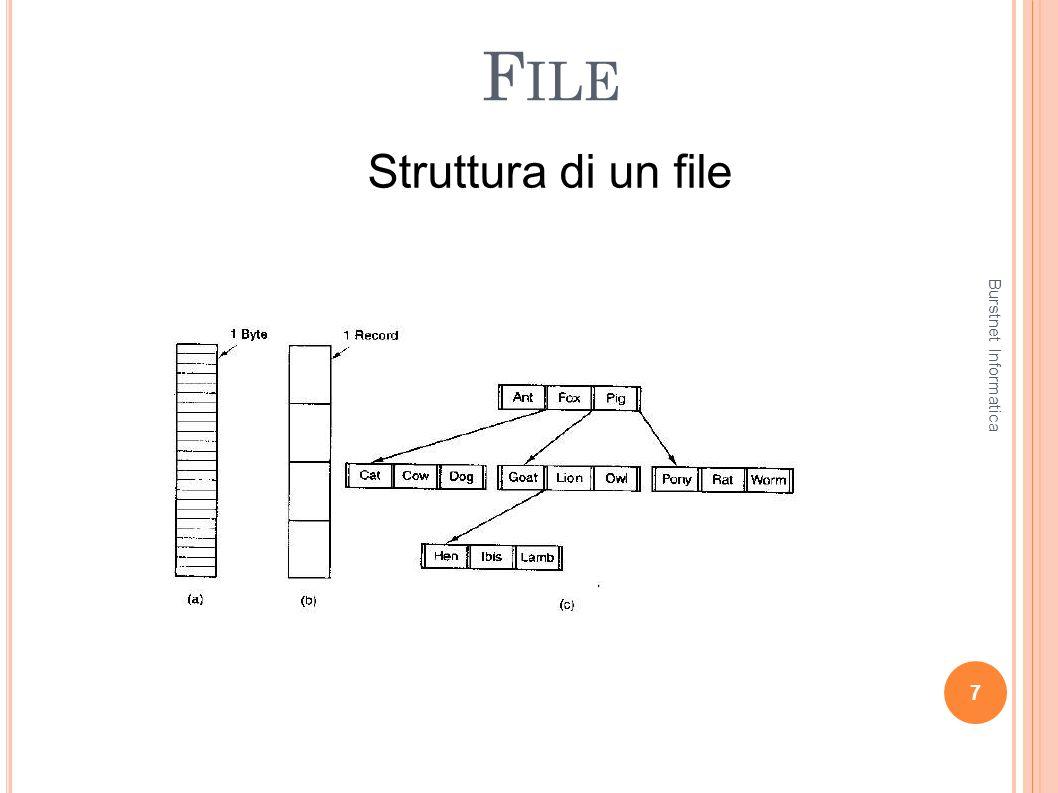 File Struttura di un file Burstnet Informatica