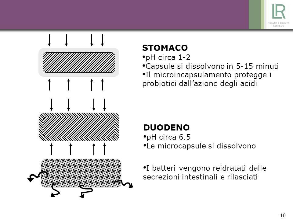 STOMACO DUODENO pH circa 1-2 Capsule si dissolvono in 5-15 minuti