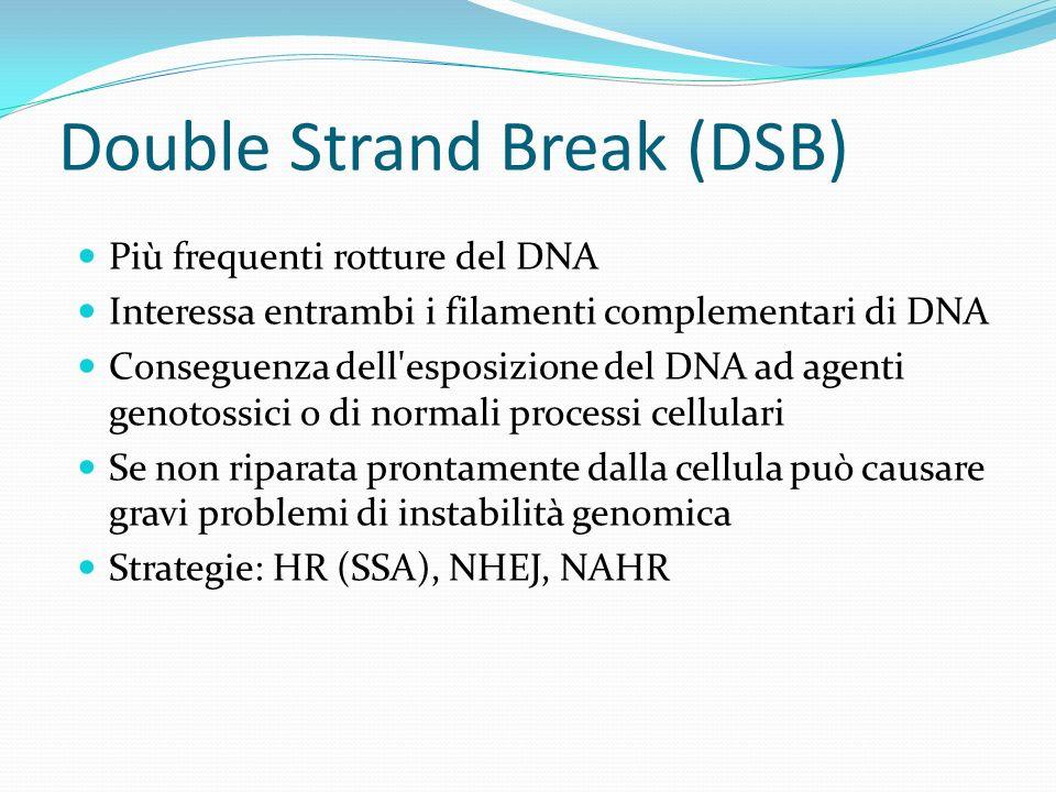 Double Strand Break (DSB)