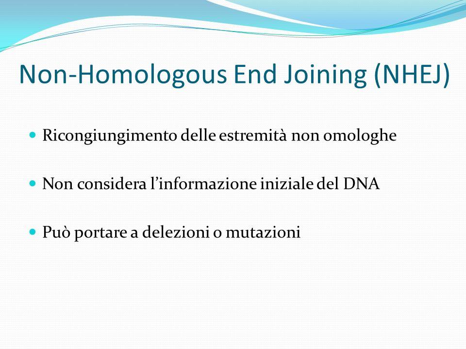 Non-Homologous End Joining (NHEJ)