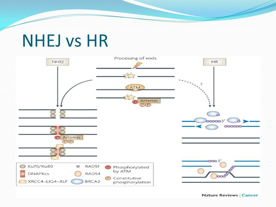 NHEJ vs HR