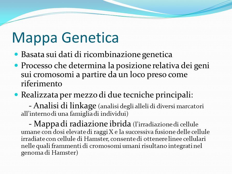 Mappa Genetica Basata sui dati di ricombinazione genetica