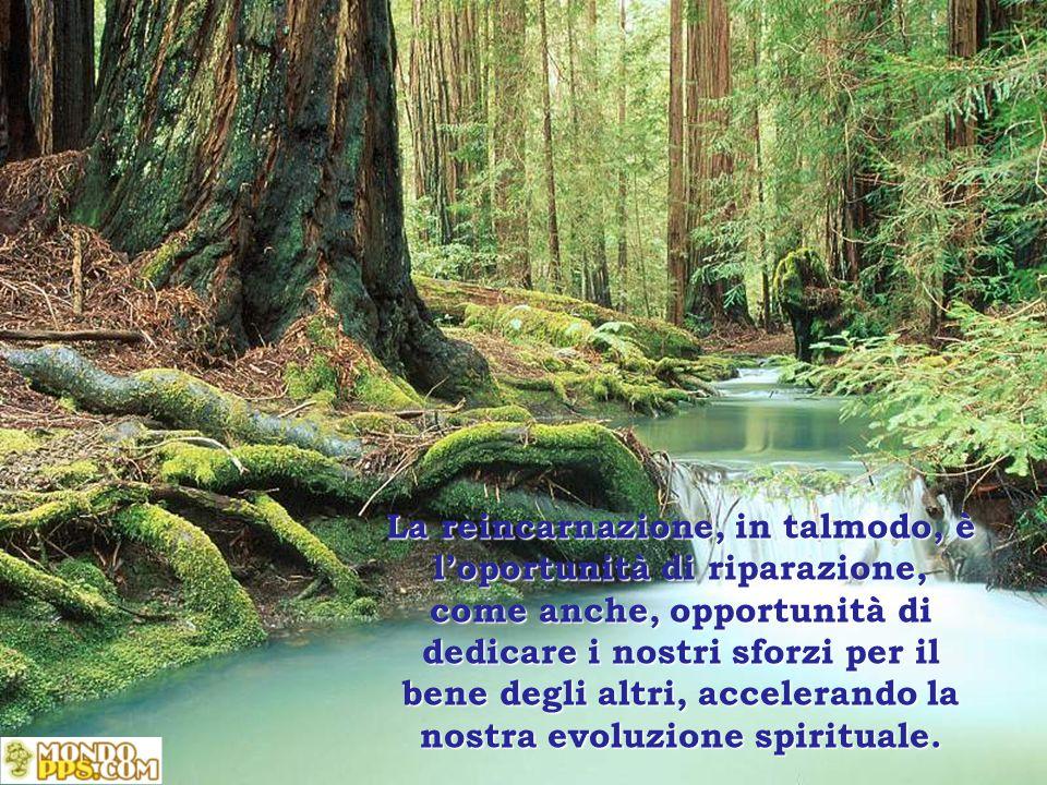 La reincarnazione, in talmodo, è l'oportunità di riparazione, come anche, opportunità di dedicare i nostri sforzi per il bene degli altri, accelerando la nostra evoluzione spirituale.