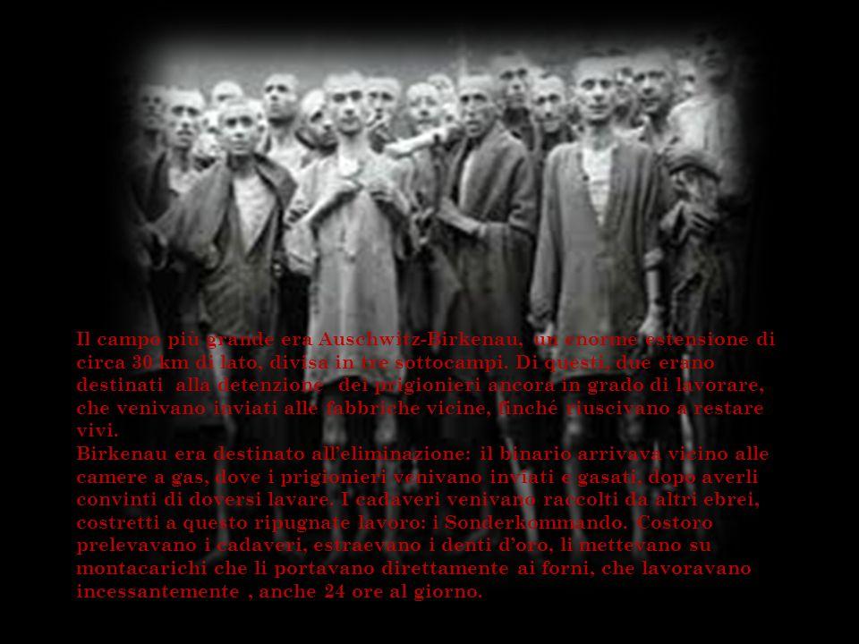 Il campo più grande era Auschwitz-Birkenau, un enorme estensione di circa 30 km di lato, divisa in tre sottocampi. Di questi, due erano destinati alla detenzione dei prigionieri ancora in grado di lavorare, che venivano inviati alle fabbriche vicine, finché riuscivano a restare vivi.