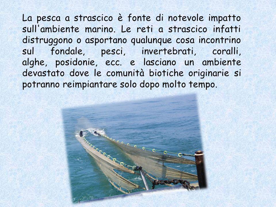 La pesca a strascico è fonte di notevole impatto sull ambiente marino