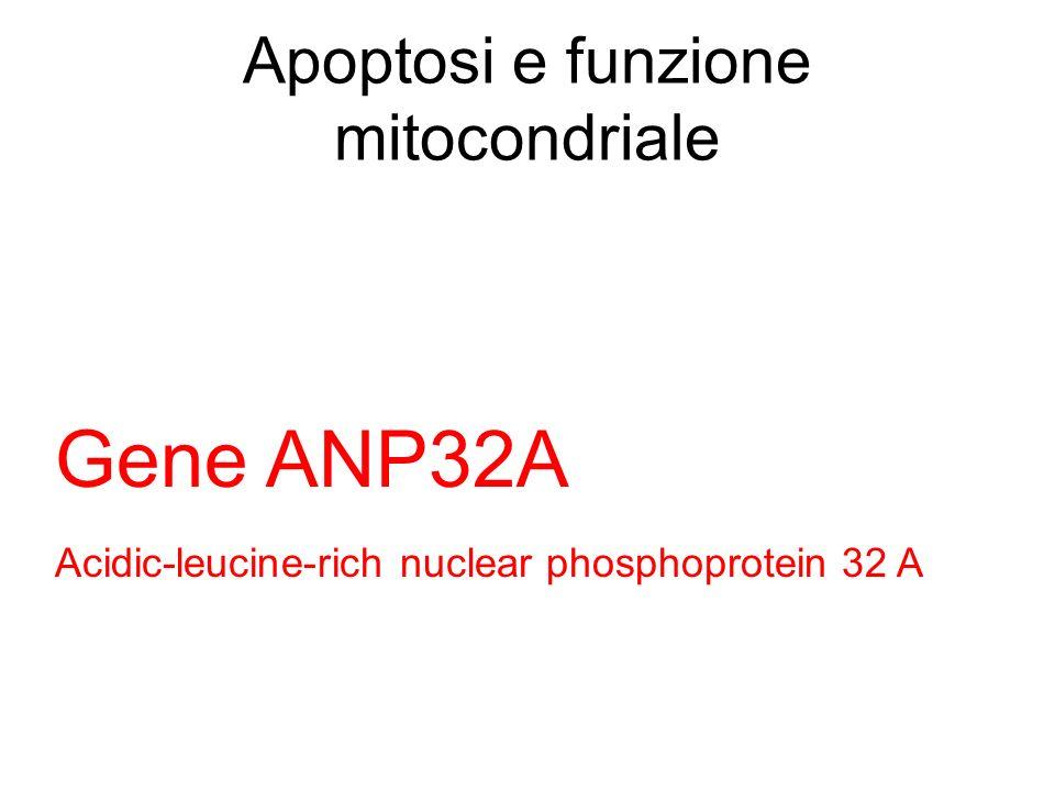 Apoptosi e funzione mitocondriale