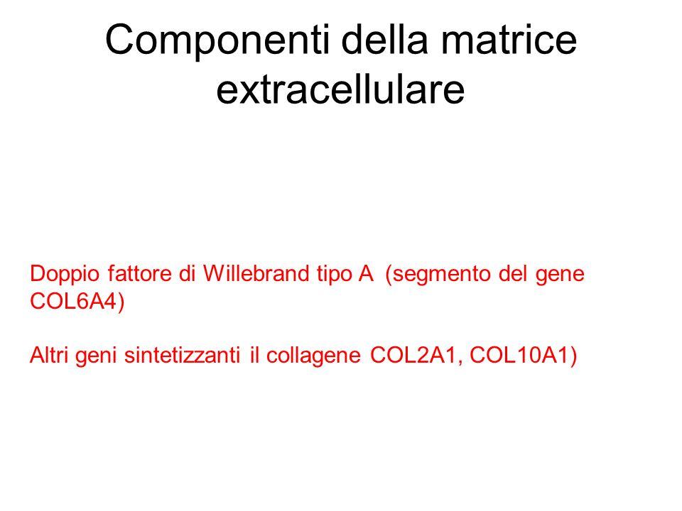 Componenti della matrice extracellulare