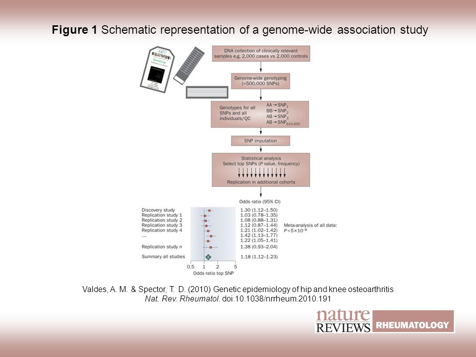 Figure 1 Schematic representation of a genome-wide association study