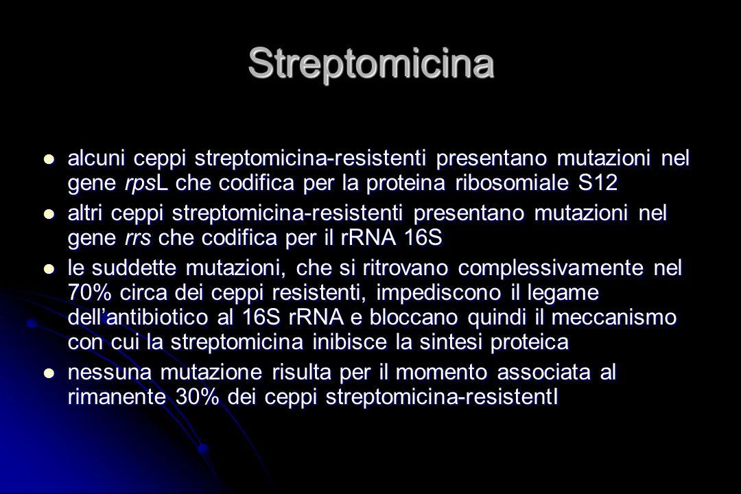 Streptomicina alcuni ceppi streptomicina-resistenti presentano mutazioni nel gene rpsL che codifica per la proteina ribosomiale S12.