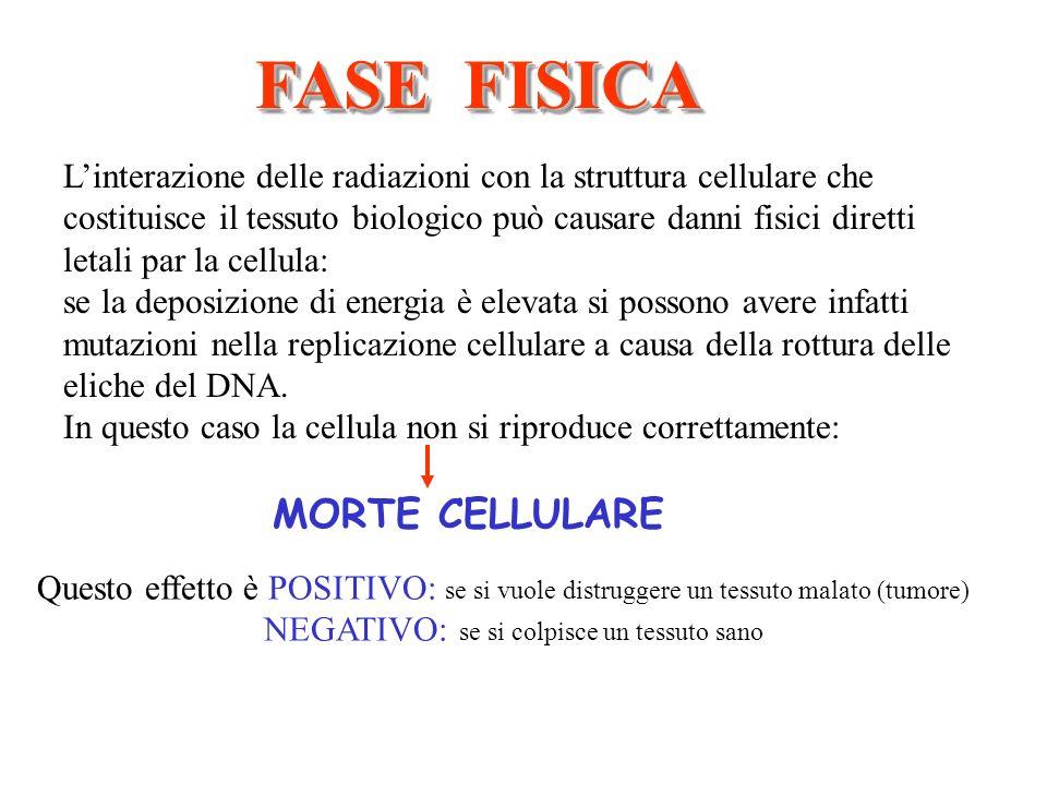 FASE FISICA