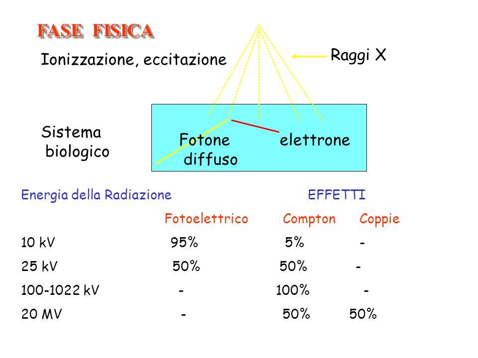 FASE FISICA Raggi X Ionizzazione, eccitazione Sistema biologico Fotone
