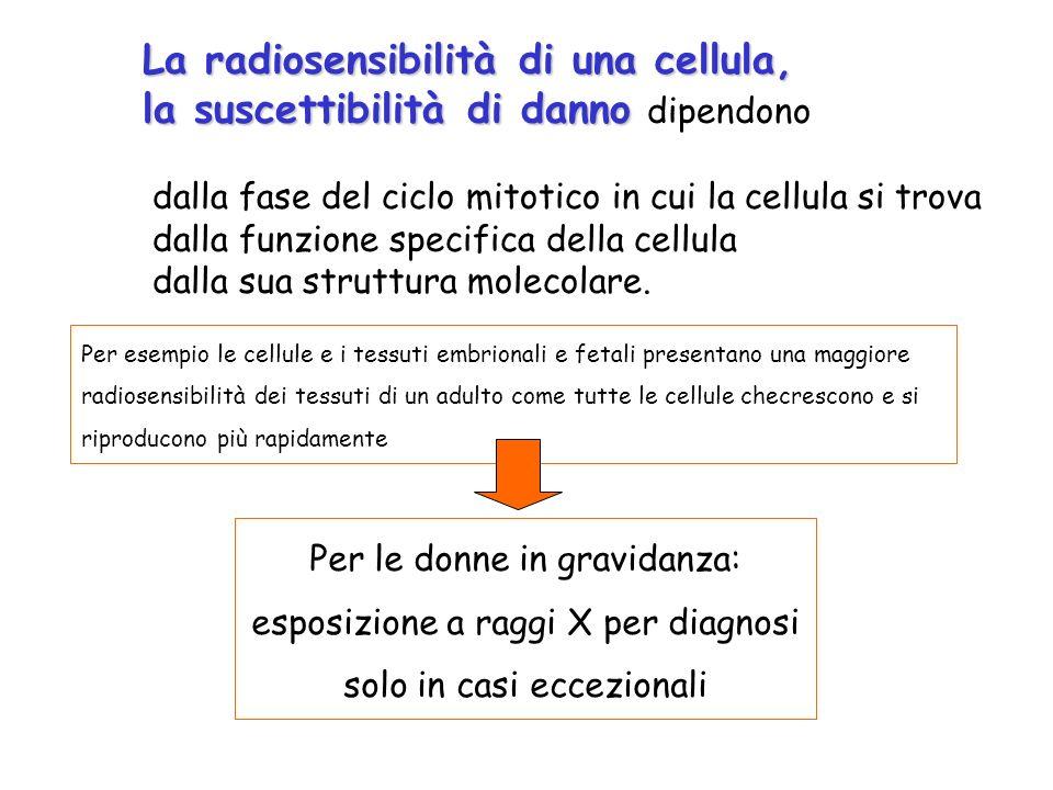 La radiosensibilità di una cellula,