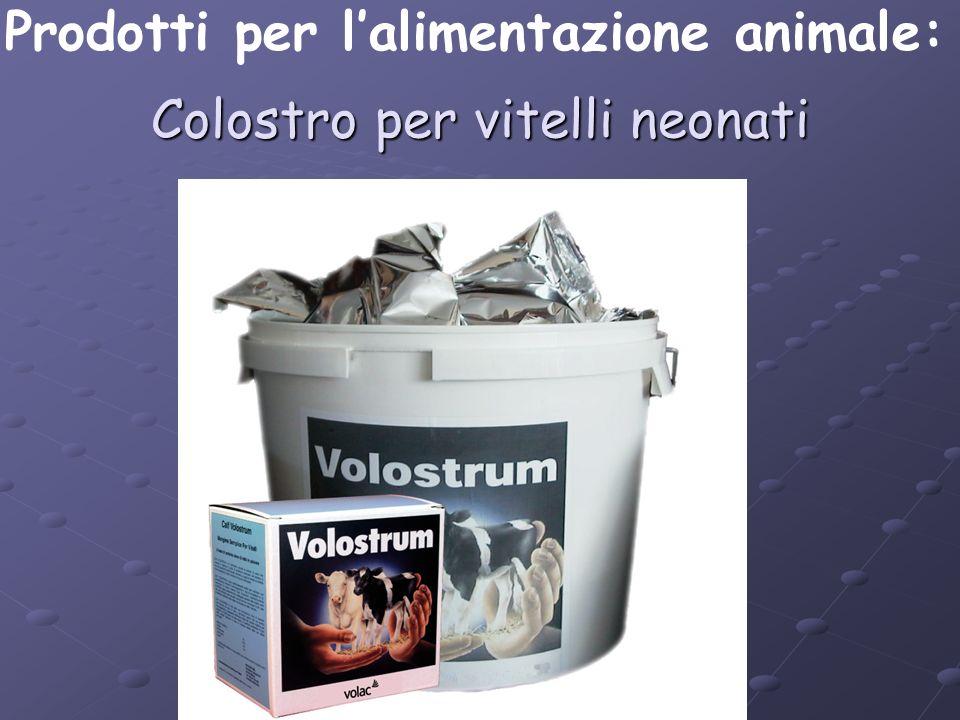Colostro per vitelli neonati