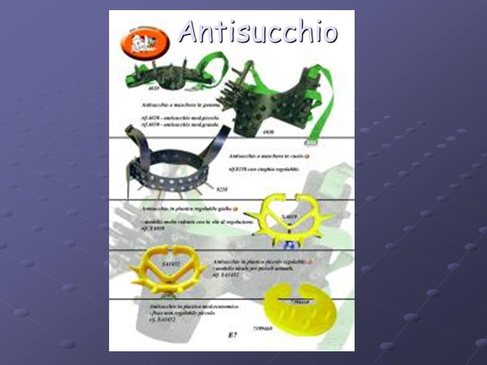 Antisucchio