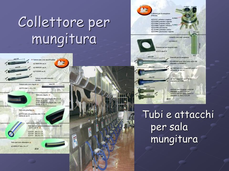 Collettore per mungitura