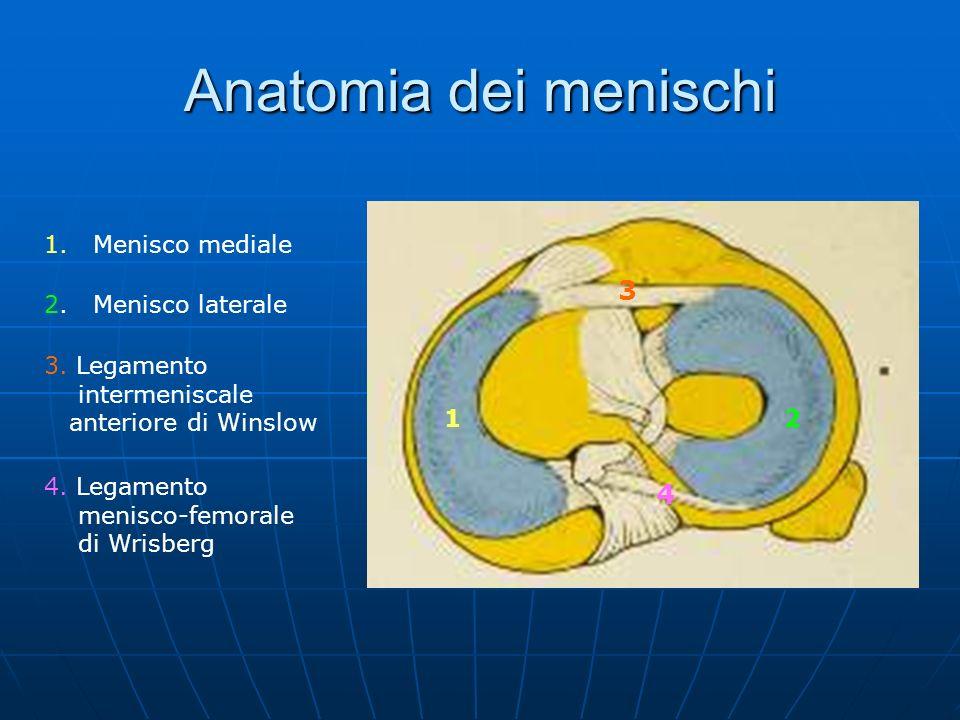 Anatomia dei menischi 3 4 1. Menisco mediale 2. Menisco laterale