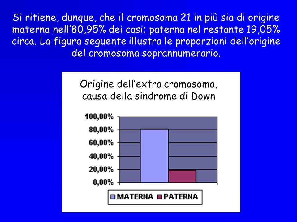 Origine dell'extra cromosoma, causa della sindrome di Down