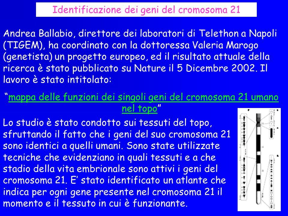 Identificazione dei geni del cromosoma 21