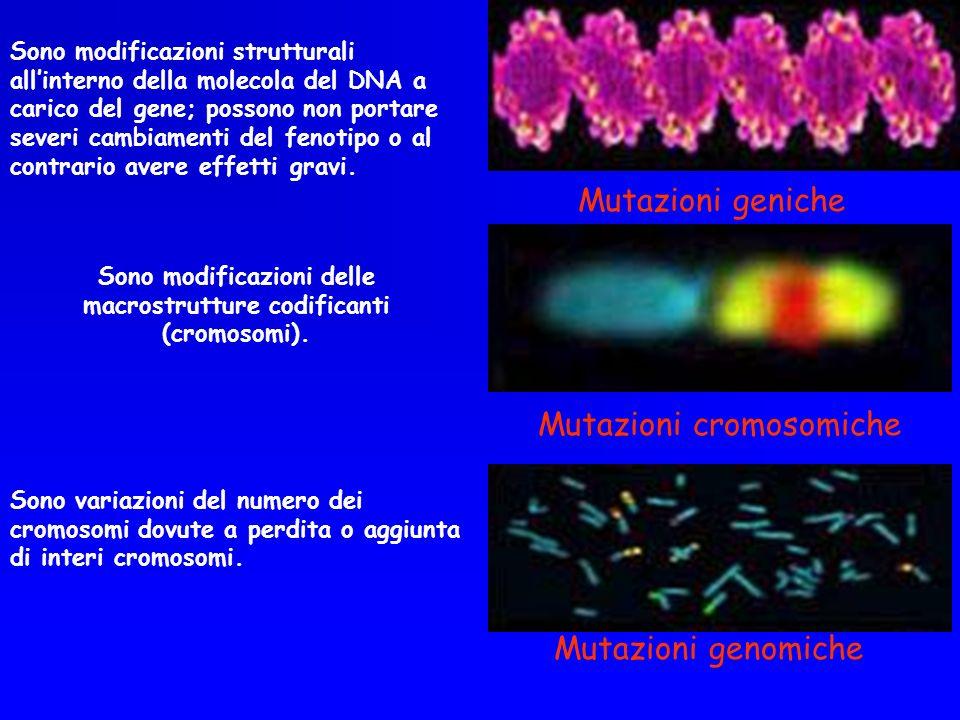Sono modificazioni delle macrostrutture codificanti (cromosomi).