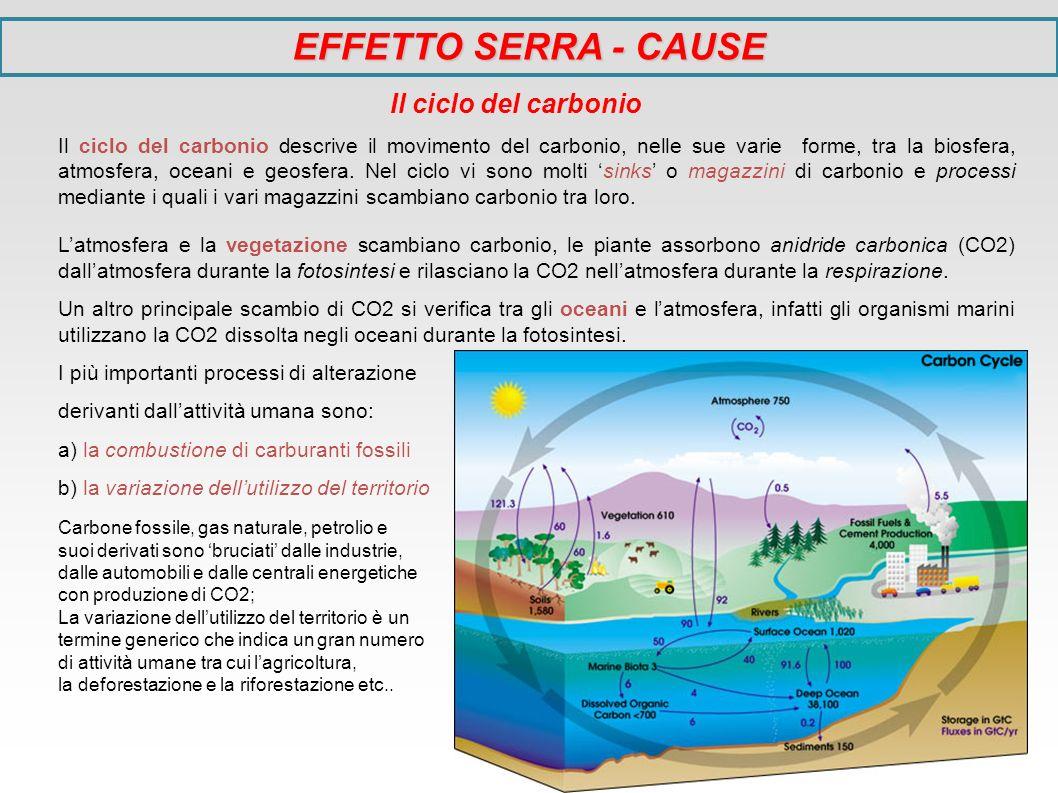 EFFETTO SERRA - CAUSE Il ciclo del carbonio
