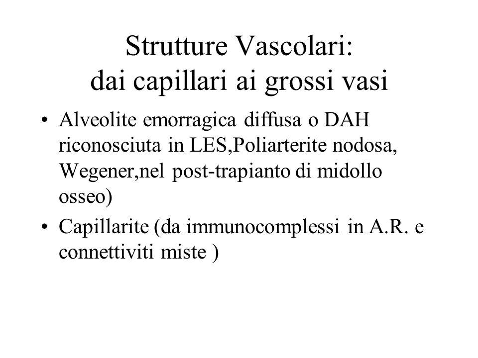 Strutture Vascolari: dai capillari ai grossi vasi