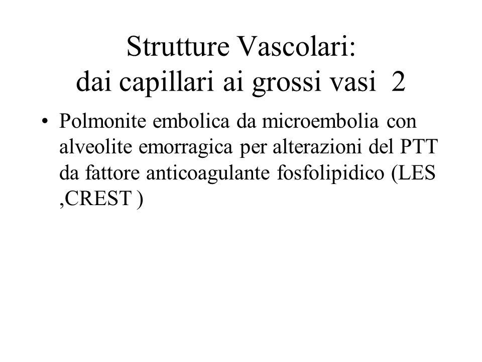 Strutture Vascolari: dai capillari ai grossi vasi 2