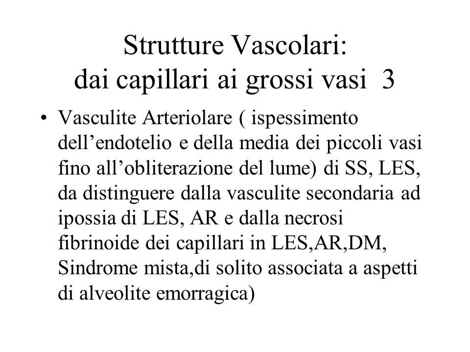 Strutture Vascolari: dai capillari ai grossi vasi 3