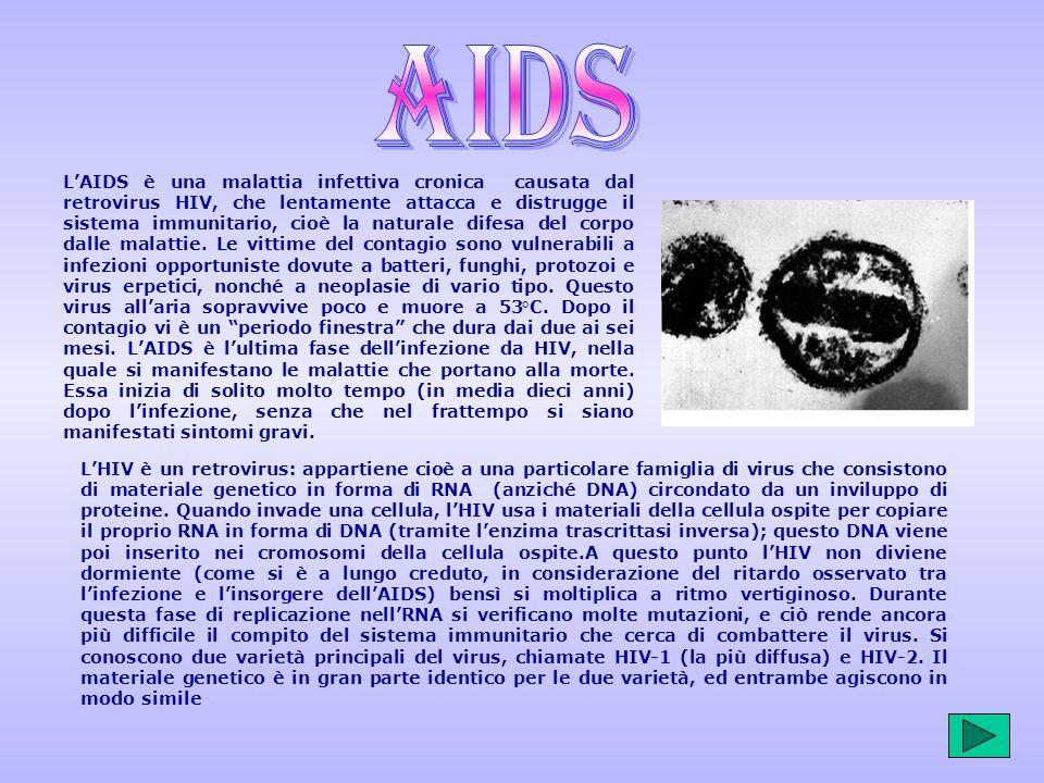 Nasce una nuova vita fecondazione naturale ovociti - Aids periodo finestra ...