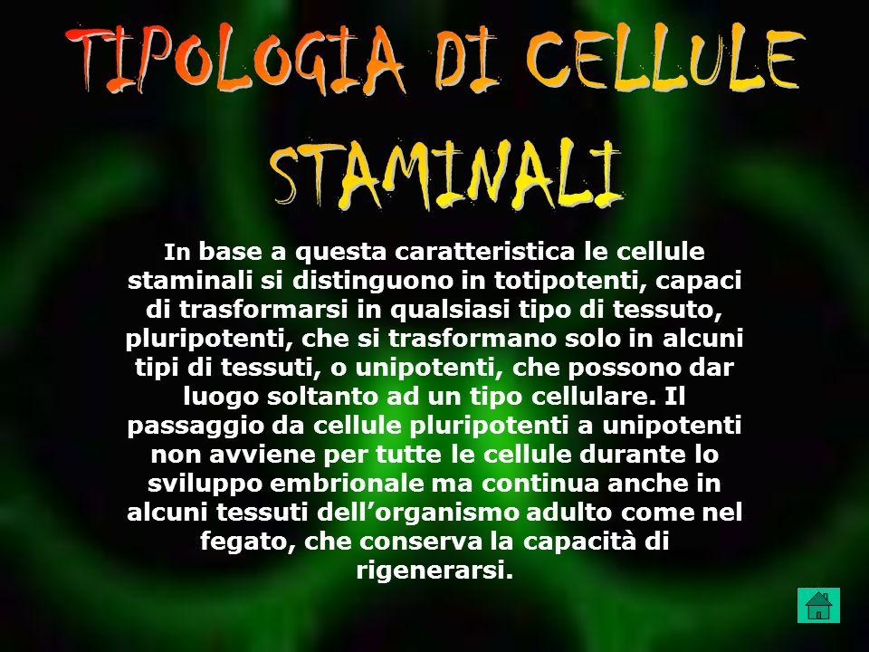 TIPOLOGIA DI CELLULE STAMINALI