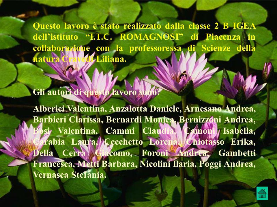 Questo lavoro è stato realizzato dalla classe 2 B IGEA dell'istituto I.T.C. ROMAGNOSI di Piacenza in collaborazione con la professoressa di Scienze della natura Cravedi Liliana.