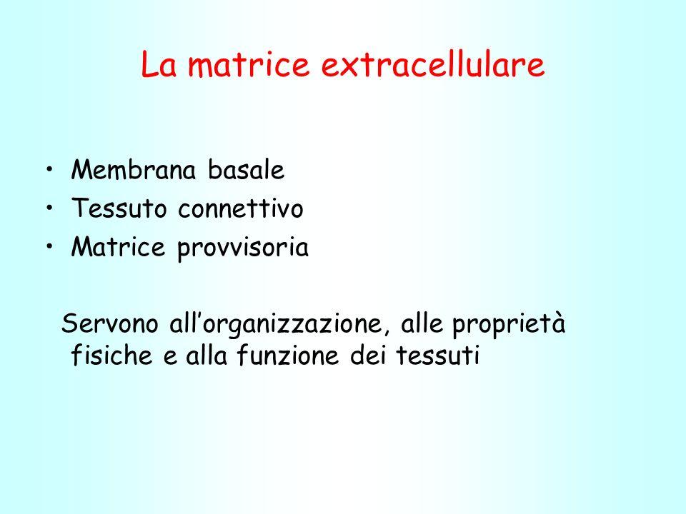 La matrice extracellulare