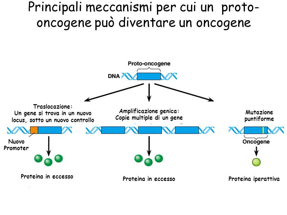 Principali meccanismi per cui un proto-oncogene può diventare un oncogene