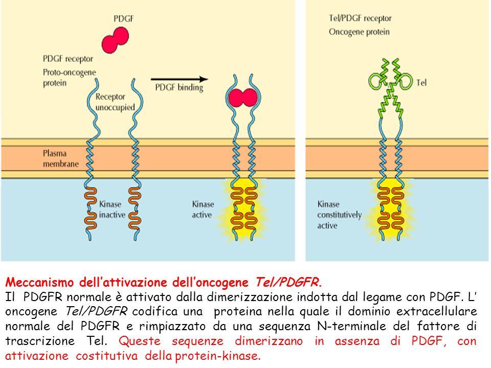 Meccanismo dell'attivazione dell'oncogene Tel/PDGFR.