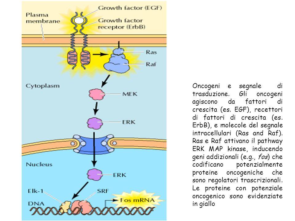Oncogeni e segnale di trasduzione