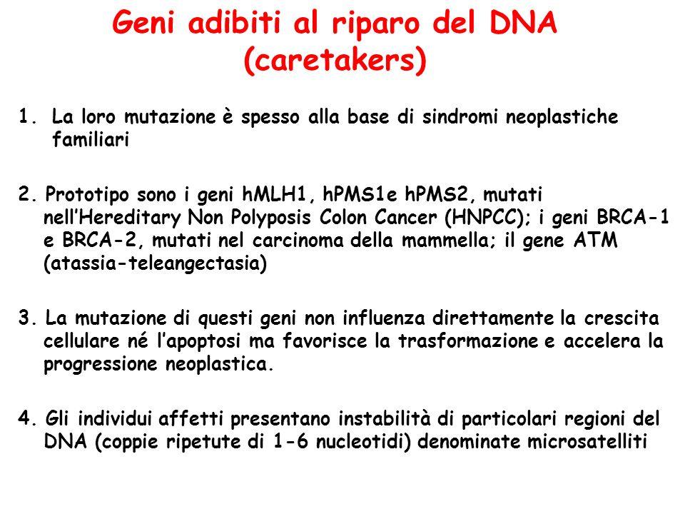 Geni adibiti al riparo del DNA (caretakers)