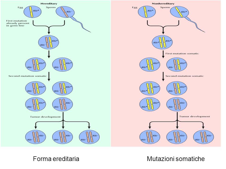 Forma ereditaria Mutazioni somatiche
