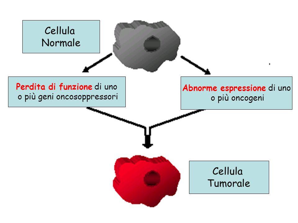 Cellula Normale Cellula Tumorale Perdita di funzione di uno