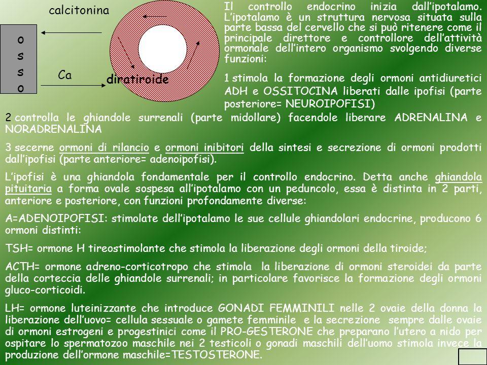 osso calcitonina Ca diratiroide
