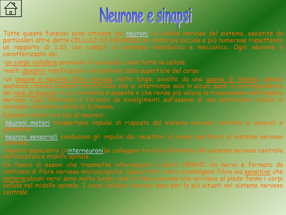 Neurone e sinapsi