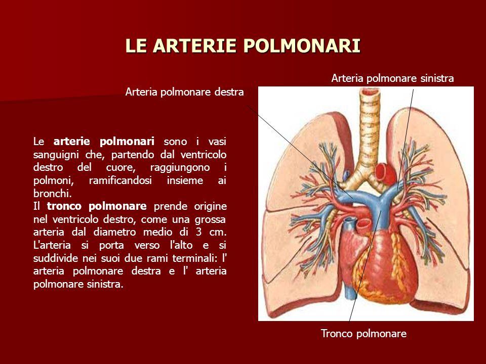 LE ARTERIE POLMONARI Arteria polmonare sinistra