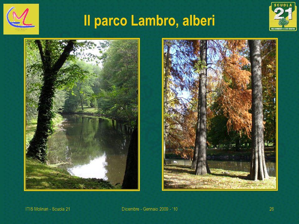 Il parco Lambro, alberi ITIS Molinari - Scuola 21