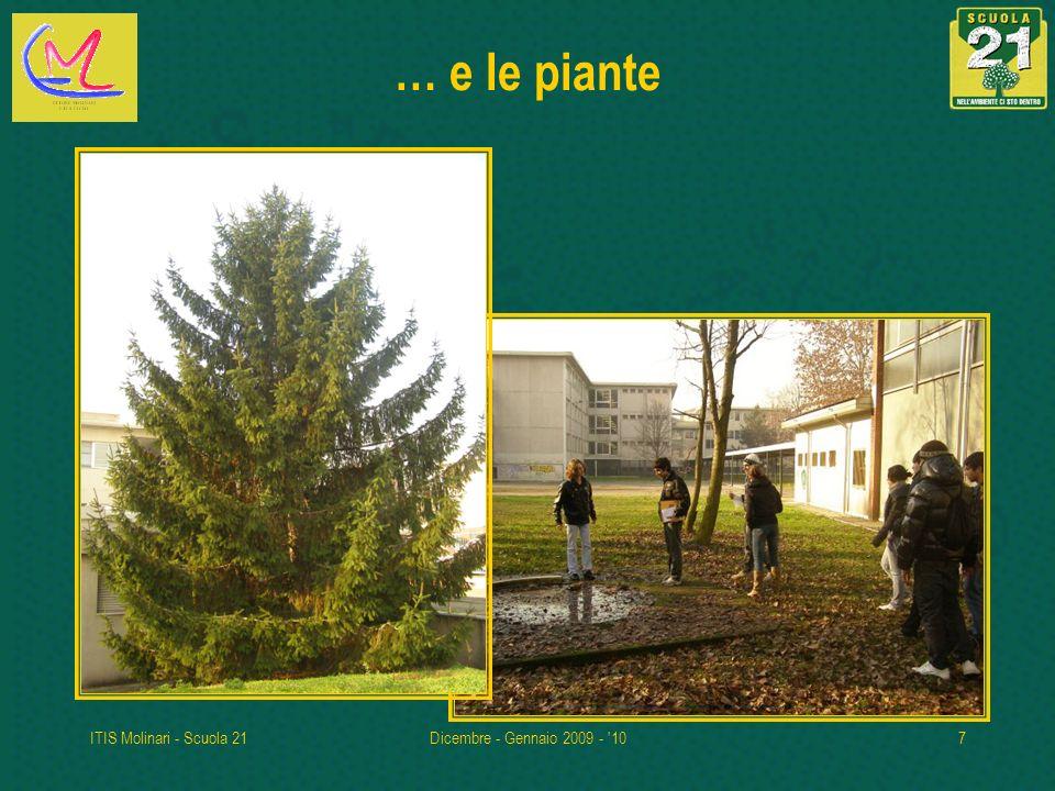 … e le piante ITIS Molinari - Scuola 21 Dicembre - Gennaio 2009 - 10