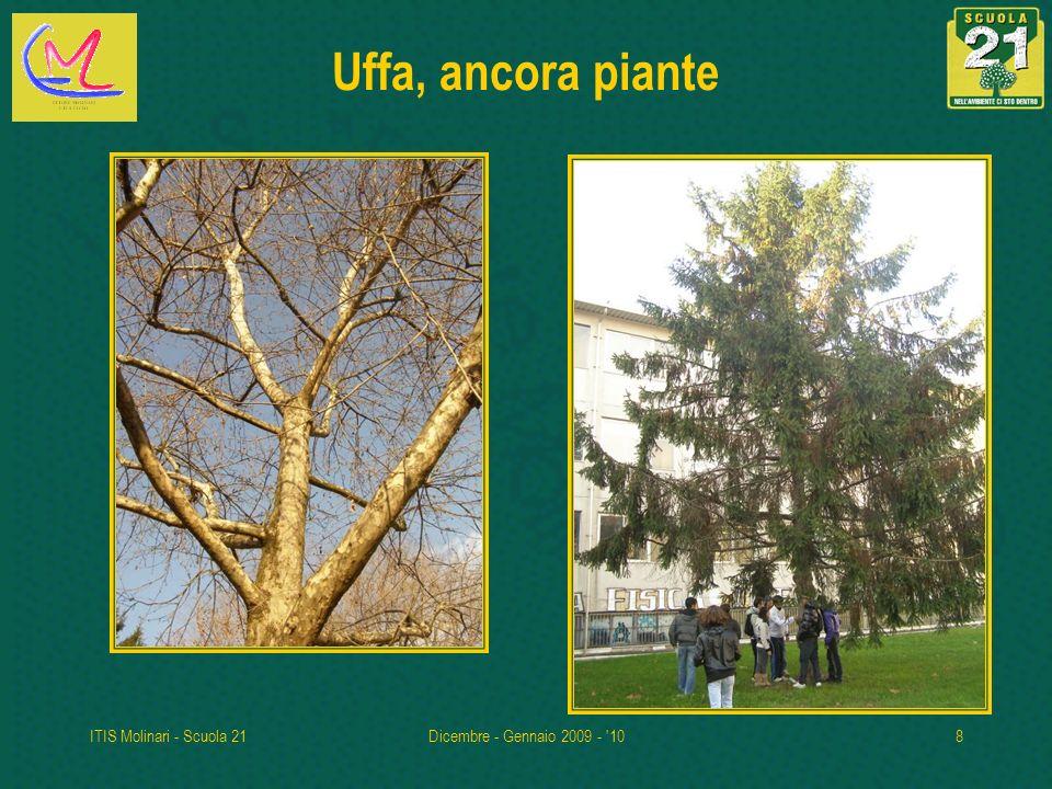 Uffa, ancora piante ITIS Molinari - Scuola 21