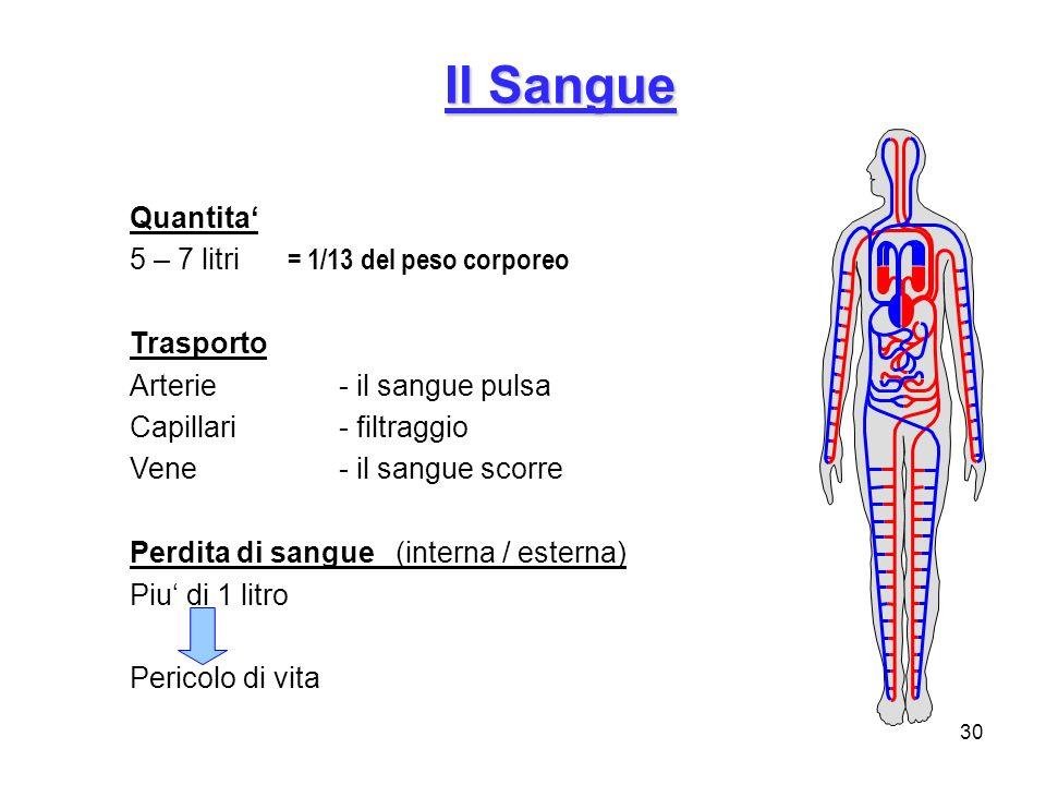 Il Sangue Quantita' 5 – 7 litri = 1/13 del peso corporeo Trasporto